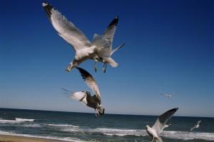 Flying Sea Gulls against the ocean blue sky is best for a hopeless romantic