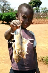Boy holding Mbeba (mice) in a village in Lundazi district in Eastern Zambia